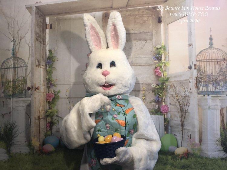 bunny20stock20center 147983746 big Easter Bunny - Fritz - Virtual Visit